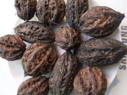 Як витягти ядро   маньчжурського горіха