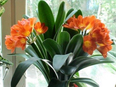 Як підібрати кімнатні квіти для будинку
