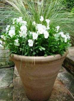 квіти на дачі в горщиках