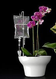 полив квітів з крапельниць