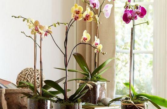 Як правильно посадити орхідею в домашніх умовах: посадка насінням, відростками і дітками, фото