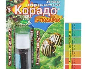 Як правильно примененять корадо проти колорадського жука?