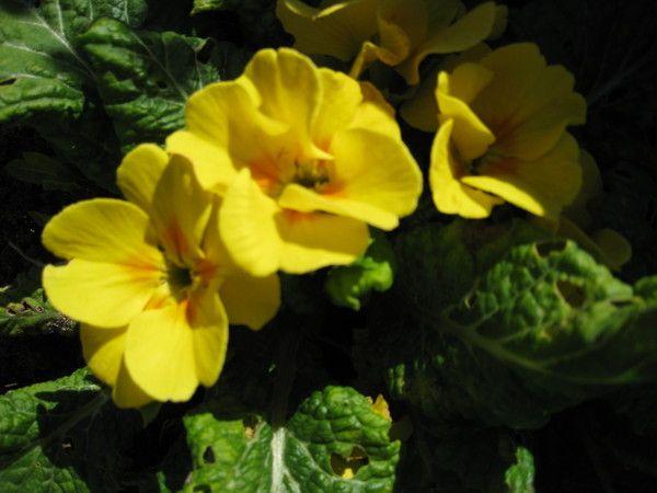 Купила азалію квітучу. Будинки варто тиждень. Чи можна перевалити в інший горщик або поки не варто?