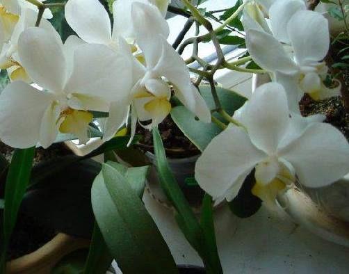 Як доглядати за кімнатними рослинами в листопаді 2016 з місячним календарем?