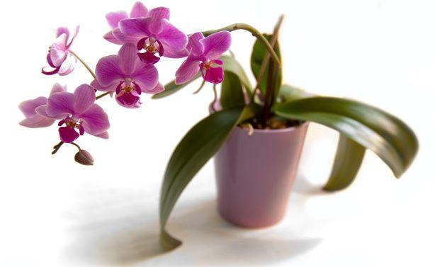 Як вибрати горщик для орхідеї: в який садити - скляний або кашпо? Види горщиків, розміри і фото