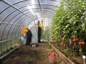 Теплиці для вирощування овочів