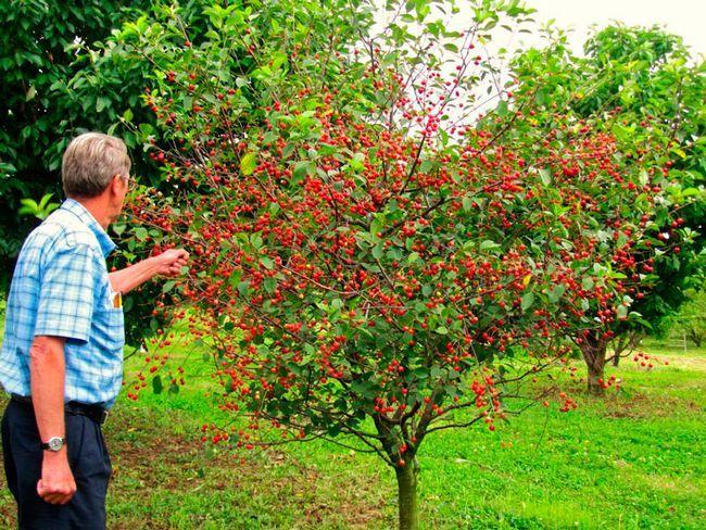 урожай на дачі або городі