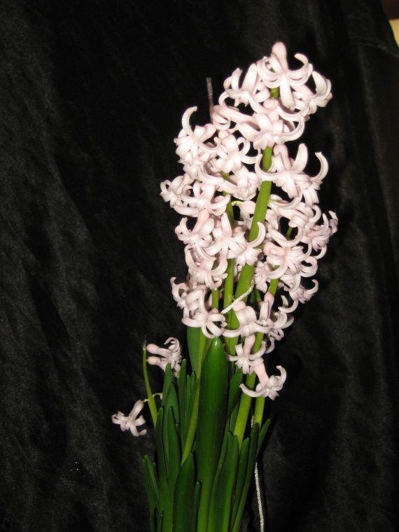 гіацинти цвітуть будинку взимку