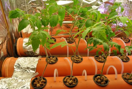вирощування помідорів методом гідропоніки