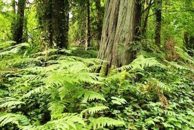 Види рослин приклади 3 клас папороті