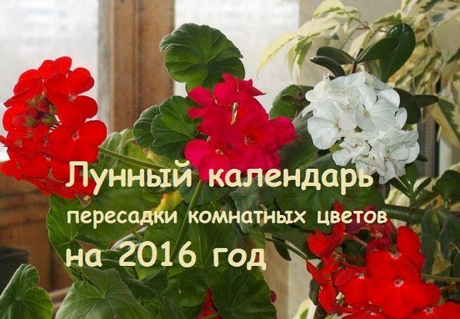 Календар пересадки і посадки кімнатних рослин на 2016 рік