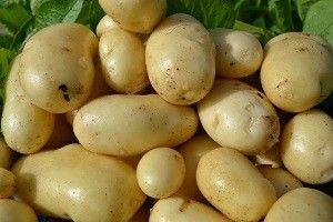 Картопля импала - вибір на користь високої якості!