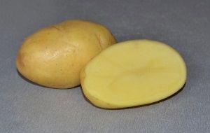 Характеристики картоплі сорту Імпала
