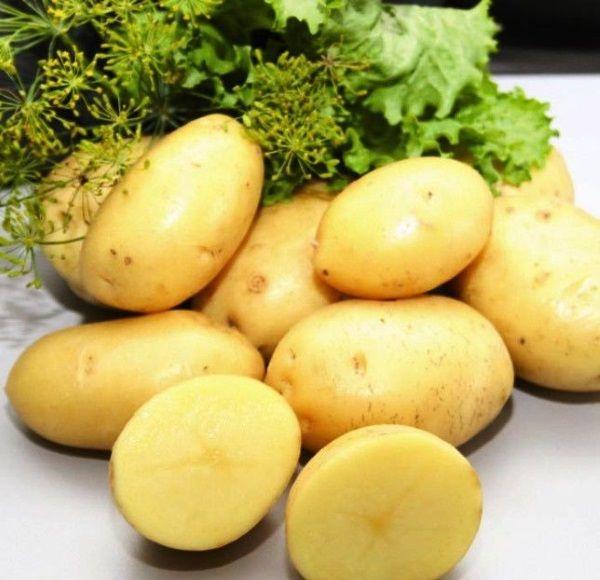 Фото картоплі сорту Рів`єра