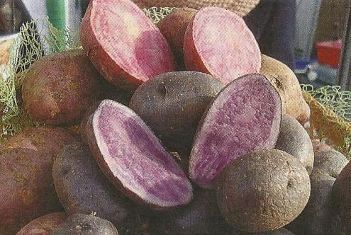 Картопля з м`якоттю різного кольору, особливості хімічного складу сортів різного кольору