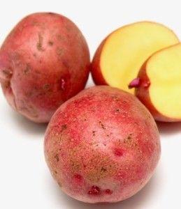 Картопля сорту каменський: колорадським жукам не по зубах!