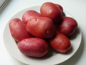 Картопля сорту Каменський: опис