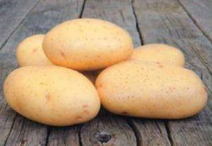 Картопля сорту «таисия», що володіє приголомшливою характеристикою: опис сорту, фото