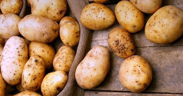 Картопля сорту Весна і Весна біла: фото і опис