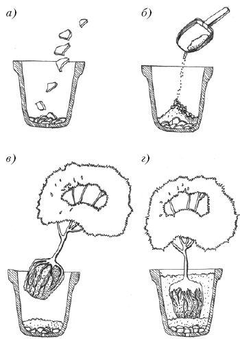 як правильно пересадити квітку