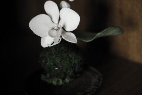 Кокедама для міні-фаленопсис
