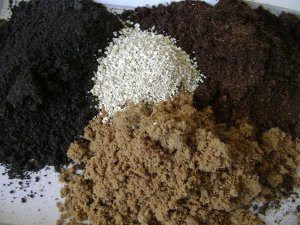 Компоненти і склад ідеального грунту для перців: для розсади і в городі, як приготувати своїми руками
