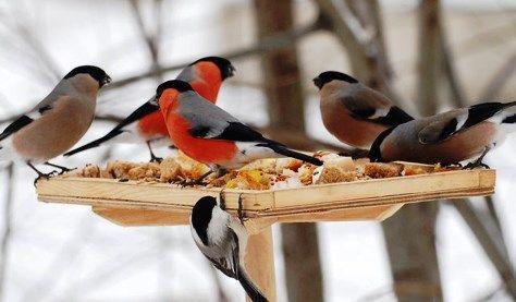 Годівниця для птахів своїми руками, фото