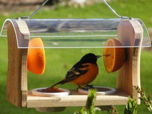 Годівниці для птахів своїми руками з підручних матеріалів