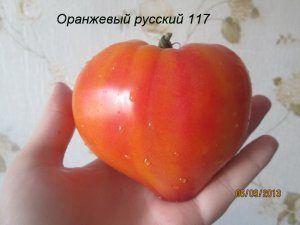 Красиві і смачні помідори - томат «помаранчевий російський 117»