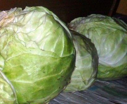 Квашення капусти, правильне зберігання продукту