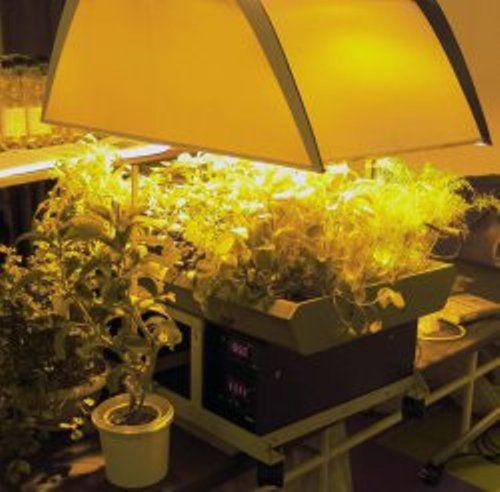 Лампи для досвітки розсади, типи ламп для досвітки розсади