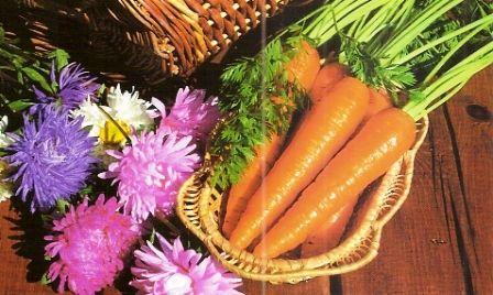 Лікувальні властивості моркви, народні рецепти
