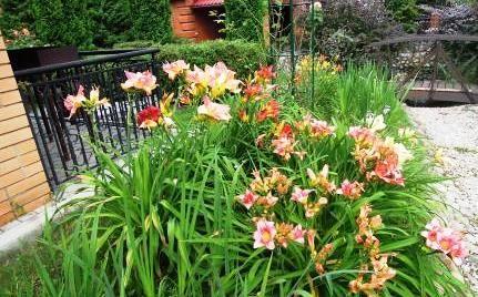квіти біля паркану дачі