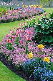 Цибулинні в дизайні саду