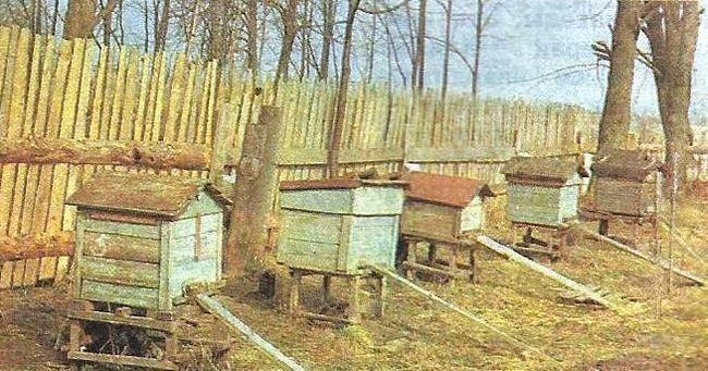 Березень на пасіці, заходи по догляду за бджолами