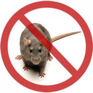 Актуальне питання в усі часи: як позбутися від щурів?