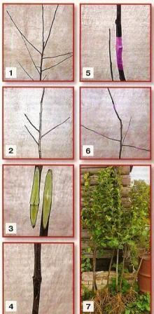 Багатосортова дерево, створення багатосортова дерева