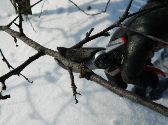 обрізка дерева