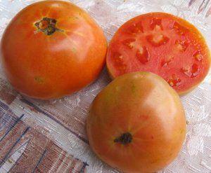 Знахідка для фермерів - сорт томата «шедевр ранній»: фото і загальний опис