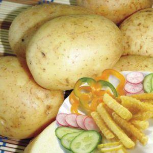 Справжні ласощі - картопля ласунок: опис сорту, характеристика, фото