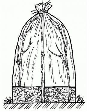 Міні-теплиця «вігвам»