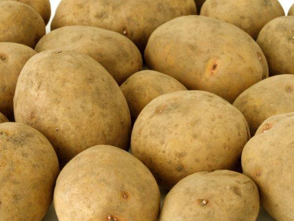 Картопля сорту Моллі: фото і опис