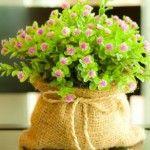 квіти садка