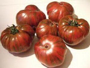 Неповторний і запам`ятовується томат «смугастий шоколад»: опис сорту, фото