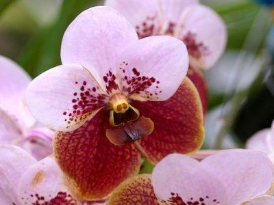 Кілька простих способів, як виростити орхідею в домашніх умовах