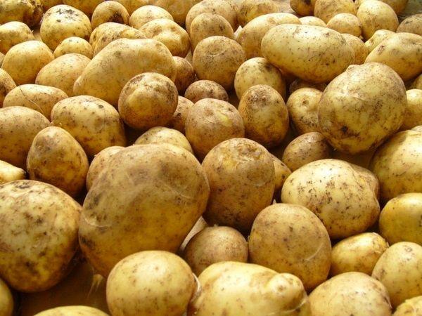 Картопля сорту Каратоп: фото і опис