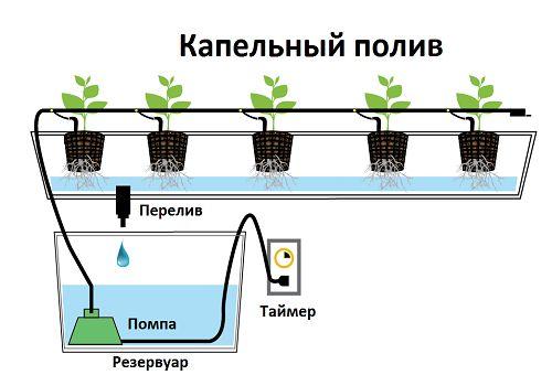 вирощування полуниці