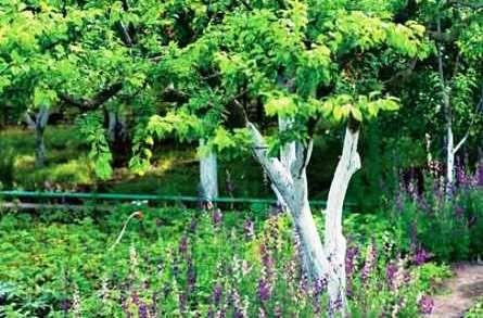 Обрізка дерев: восени або навесні?