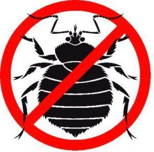 Огляд сучасних інсектицидів: краще кошти від клопів в домашніх умовах
