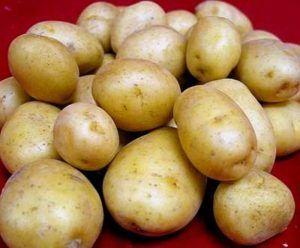 Опис високоурожайного сорти картоплі «голландка»